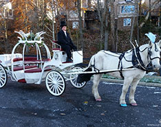 Carriage Limousine Service - Horse Drawn Carriages: Our one of a kind Cinderella Carriage during a wedding at Seven Springs Resort in PA