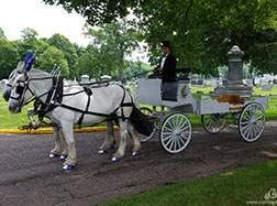 Carriage Limousine Service - Horse Drawn Carriages: Our one of a kind Horse Drawn Caisson Hearse after a funeral in Coshocten, OH