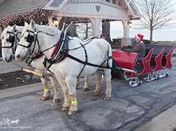Carriage Limousine Service - Horse Drawn Carriages: Our one of a kind horse drawn sleigh between giving Sleigh rides in Bratenahl, OH