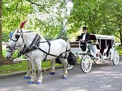 Carriage Limousine Service - Horse Drawn Carriages: Our Stretch Victorian Carriage during a wedding in Sewickley, PA