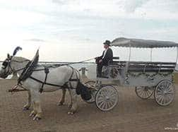 Carriage Limousine Service - Horse Drawn Carriages: Our one of a kind horse drawn Limousine Carriage after a wedding right on lake Erie in downtown Cleveland, OH