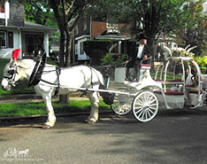 The couple posing with our Cinderella Carriage at their Prom outside of Cleveland, OH
