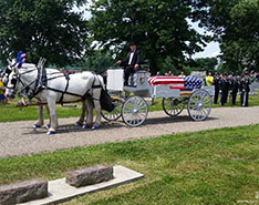 Carriage Limousine Service - Horse Drawn Carriages: Our horse drawn caisson hearse during a funeral in Coshocton, OH