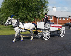 Carriage Limousine Service - Horse Drawn Carriages: Our horse drawn caisson hearse during a funeral
