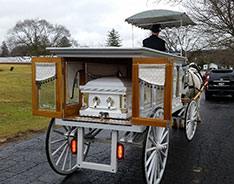 Carriage Limousine Service - Horse Drawn Carriages: Our horse drawn funeral coach before a funeral in near Akron, OH