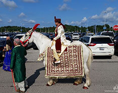 Indian Wedding Horse Gallery