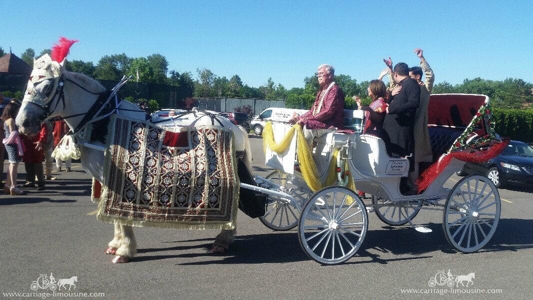 Our Indian Wedding Horse & Carriage during during the Baraat near Cleveland, OH
