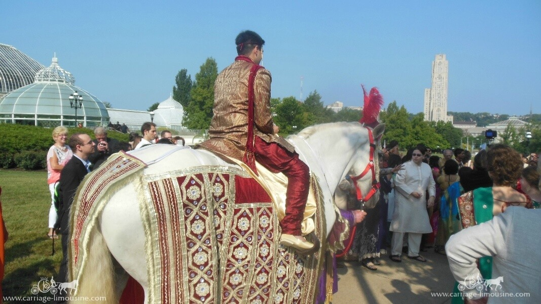 The groom riding our Indian Baraat Horse at Phipps Conservatory in Pittsburgh, PA