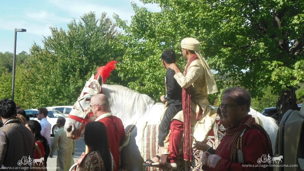 The groom coming in on one of our Wedding Baraat Horse Canonsburg, PA
