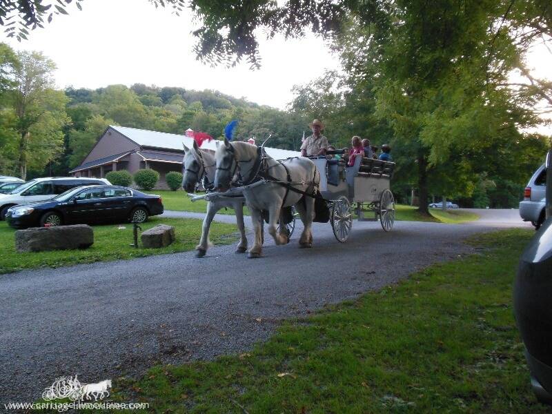 Giving carriage rides in Beaver PA