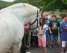 Carriage Limousine Service - Horse Drawn Carriages: Our Percheron Draft King with some 5th graders