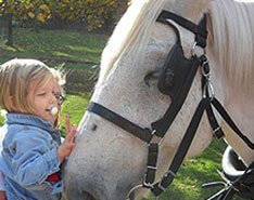 Carriage Limousine Service - Horse Drawn Carriages: Our Percheron Draft Pearl