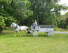Carriage Limousine Service - Horse Drawn Carriages: Our Percheron Draft horse named Suzy pulling our Limousine Carriage at our home