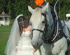 Carriage Limousine Service - Horse Drawn Carriages: The bride comparing shoes with Lady after her wedding outside of Canton OH.