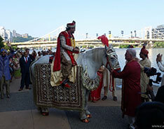 Carriage Limousine Service - Horse Drawn Carriages: One of our Indian Wedding horses during a Baraat at the David L Lawrence Convention Center in Pittsburgh, PA