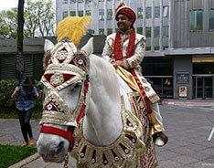 Carriage Limousine Service - Horse Drawn Carriages: Indian Baraat Horse for a Indian Wedding in Pittsburgh, PA