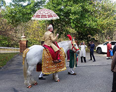 Carriage Limousine Service - Horse Drawn Carriages: Indian Baraat Horse for an Indian wedding near Monroeville, PA