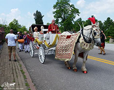 Carriage Limousine Service - Horse Drawn Carriages: Indian Baraat Carriage for a Indian wedding at the Palace of Gold near Moundsville, WV