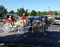 Carriage Limousine Service - Horse Drawn Carriages: Indian Baraat Carriage for a Indian wedding near Cleveland, OH