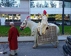Carriage Limousine Service - Horse Drawn Carriages: Indian Wedding Horse during a Baraat in Cleveland, OH