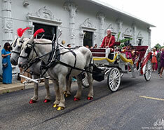 Carriage Limousine Service - Horse Drawn Carriages: Stretch Indian Baraat Carriage for a Indian wedding in Monroeville, PA