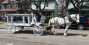 Carriage Limousine Service - Horse Drawn Carriages: Our one of a kind horse drawn funeral coach during a funeral in Erie, PA
