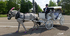 Carriage Limousine Service - Horse Drawn Carriages: Our Victorian Carriage at a Prom near Pittsburgh, PA