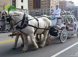 Carriage Limousine Service - Horse Drawn Carriages: Our Cinderella carriage in the St. Patricks Day Parade in Pittsburgh PA