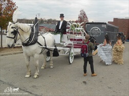 Carriage Limousine Service - Horse Drawn Carriages: Our one of a kind Cinderella Carriage while filming for TLC's show My Big Fat American Gypsy Wedding in Uniontown, PA