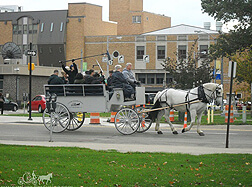 Carriage Limousine Service - Horse Drawn Carriages: Our one of a kind Limousine Carriage while filming a movie in Erie PA