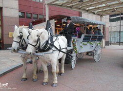 Carriage Limousine Service - Horse Drawn Carriages: Our Limousine carriage at a birthday in downtown Cleveland Ohio