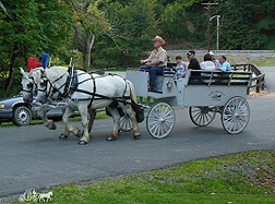 Carriage Limousine Service - Horse Drawn Carriages: Our one of a kind Limousine carriage at a picnic at Bradys Run Park in Beaver PA