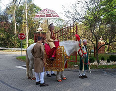 Carriage Limousine Service - Horse Drawn Carriages: Indian Wedding Horse during a Baraat near Moundsville, WV