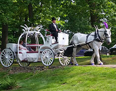 Carriage Limousine Service - Horse Drawn Carriages: Our Cinderella Carriage after a wedding at Landoll's Castle in Loudonville, OH