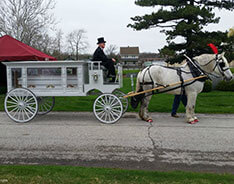 Carriage Limousine Service - Horse Drawn Carriages: Our one of a kind horse drawn funeral coach during a funeral in Lorain, OH