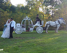 Carriage Limousine Service - Horse Drawn Carriages: Our one of a kind Cinderella carriage after a wedding at Sparrow Hill in Adamsville, PA