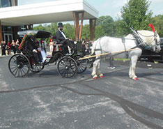 Carriage Limousine Service - Horse Drawn Carriages: Princess Carriage at a wedding in Medina, OH