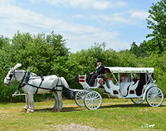 Carriage Limousine Service - Horse Drawn Carriages: Our Stretch Victorian Carriage before a wedding in Rootstown, OH