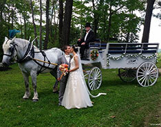 Carriage Limousine Service - Horse Drawn Carriages: Our one of a kind Limousine Horse Drawn Carriage at a wedding in Seven Springs, PA