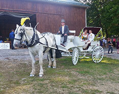 Carriage Limousine Service - Horse Drawn Carriages: Our Victorian Carriage after a wedding in PA