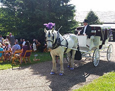 Carriage Limousine Service - Horse Drawn Carriages: Our Victorian carriage during a wedding in Salem, OH